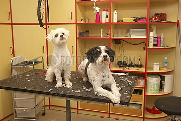 Hundesalon | Pet Grooming