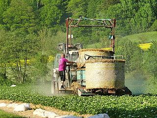 Arbeit auf einem Erdbeerfeld | work on a strawberry field