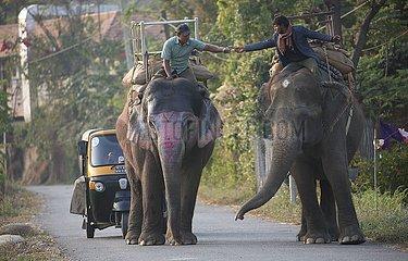 NEPAL-CHITWAN-Sauraha-ELEPHANT-ALLTAG