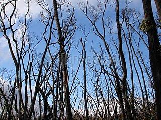 Australischer Busch nach einem Brand