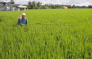 Alternate Wetting and Drying Rice  (AWD)- Technik