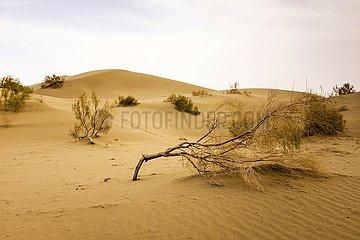 Dünenlandschaft im Zentral-Iran | dune landscape in central Iran
