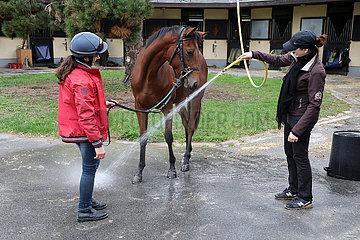 Lamorlaye  Horse gets a shower after morning track work