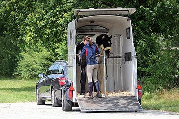 Bruemmerhof  Frau befestigt die Hinterhandstange in ihrem Pferdehaenger