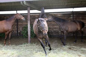 Bruemmerhof  Pferde vertreiben einen Artgenossen aus einem Unterstand