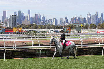 Melbourne  Horse and rider at the track in front of the skyline