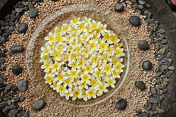Blumenvase in Zengarten