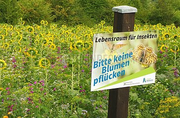 Insektenschutz  Schild an Sonnenblumenfeld | insect protection  sign on sunflower field