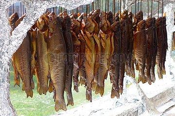 Räucherofen mit Forellen | smoker with trout