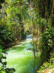 Jamaika  Region Montego Bay; Martha Brae river