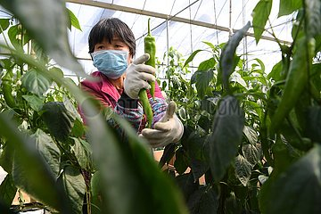 CHINA-FUJIAN-NOVEL CORONAVIRUS-VEGETABLE-SUPPLY (CN)