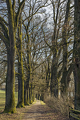 Eichenallee bei Ebersberg  Bayern