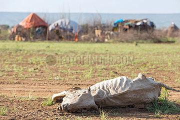 Burferedo  Somali Region  Aethiopien - Kuh-Tierkadaver