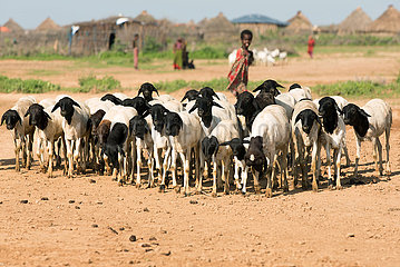 Burferedo  Somali Region  Aethiopien - Afrikanische Ziegenherde