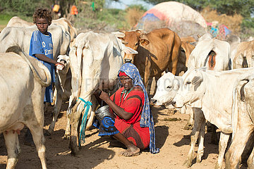 Burferedo  Somali Region  Aethiopien - Pastoralismus  Frau melkt eine Kuh
