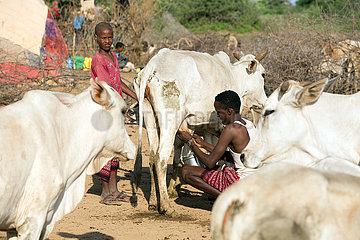 Burferedo  Somali Region  Aethiopien - Pastoralismus  Mann melkt eine Kuh