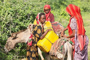Burferedo  Somali Region  Aethiopien - Esel werden mit Wasserkanister beladen