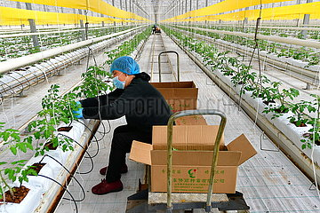CHINA-SHANXI-Jinzhong-AGRICULTURAL PRODUCTION (CN)