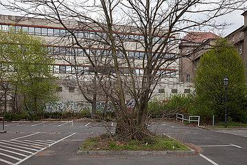 Parkplatz an der Juedenstrasse und denkmalgeschuetzter Baum in Berlin-Mitte
