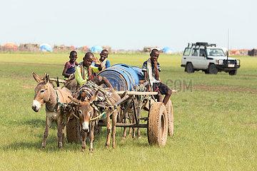 Burferedo  Somali Region  Aethiopien -Trinkwassertransport mit Eselskarren