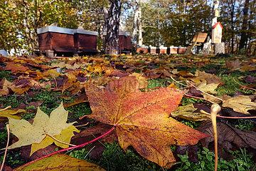 Berlin  Deutschland  Herbstlaub liegt vor einem Bienenstand am Boden