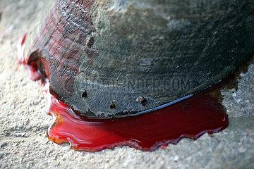 Vogelsdorf  Symbolfoto: Hufverletzung