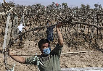 CHINA-XINJIANG-Landwirtschaft-WIEDERAUFNAHME (CN)