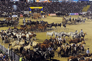 Jesus Maria  Pferdeherde beim Festival Nacional de la Doma y el Folclore in der Arena
