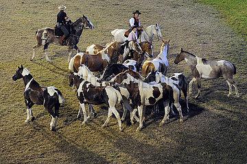 Jesus Maria  Gauchos treiben beim Festival Nacional de la Doma y el Folclore Pferde in einer Arena