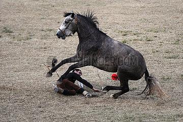 Jesus Maria  Reiter ist von seinem buckelnden Pferd gefallen