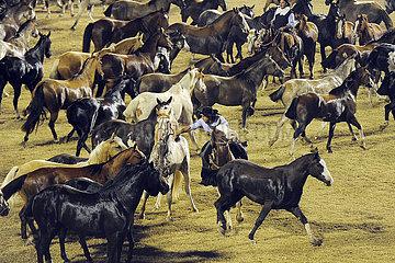 Jesus Maria  Gaucho faengt beim Festival Nacional de la Doma y el Folclore ein Pferd aus einer Herde ein