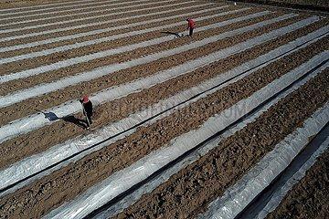 CHINA-GANSU-DUNHUANG-Desert-Landwirtschaft (CN)