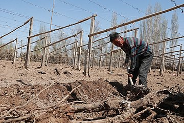 CHINA-GANSU-DUNHUANG-Desert-Landwirtschaft (CN) CHINA-GANSU-DUNHUANG-Desert-Landwirtschaft (CN) CHINA-GANSU-DUNHUANG-Desert-Landwirtschaft (CN)