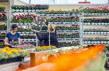Gartenbaubetrieb  Kempen  Niederrhein  Nordrhein-Westfalen  Deutschland