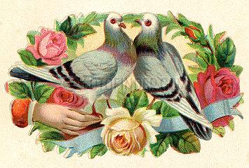 zwei Turteltauben  Poesiebild  1898