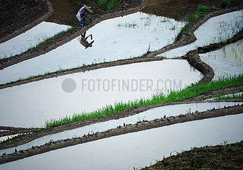 # CHINA-Guyu-LANDWIRTSCHAFT-FARM WORK (CN)