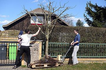Berlin  Deutschland  Maenner transportieren einen ausgegrabenen Apfelbaum auf einer Euro-Palette