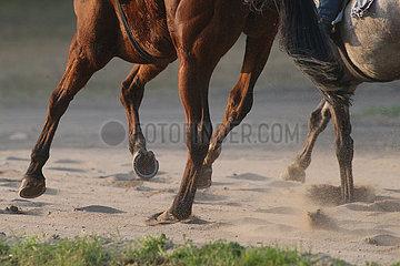 Neuenhagen  Pferdebeine im Galopp auf Sand