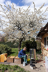 Neuenhagen  Deutschland  Imker schmilzt in einem Garten Wachs aus den Waben eines Bienenvolkes in einem Dampfwachsschmelzer