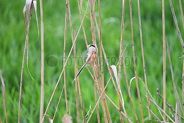 CHINA-JIANGSU-LIANYUNGANG-RARE BIRD (CN)