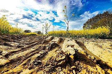 Duerre und trockener Ackerboden auf einem Rapsfeld