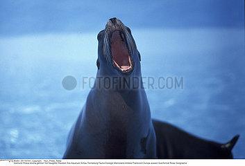 PHOQUE MAMMIFERE!!SEAL