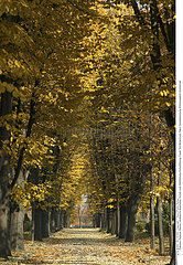 ARBRE AUTOMNE!!TREE IN AUTUMN