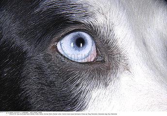 CHIEN BORDER COLLIE!!DOG  BORDER COLLIE