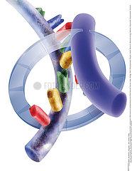GENETIQUE ADN!!GENETICS  DNA