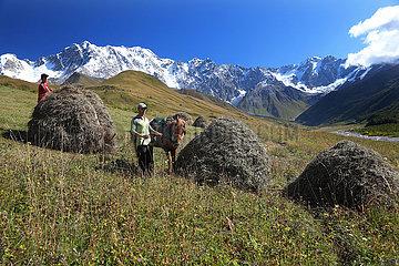 Ushguli  Georgien  Maenner bei der Heuernte im Gebirge