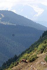 Zegani  Georgien  Pferde stehen im Gebirge an einem Hang