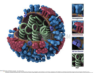 INFLUENZA VIRUS  DRAWING Illustration