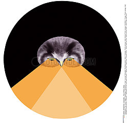 OWL VISION Illustration