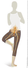 LOWER LIMB NERVE  ILLUSTRATION